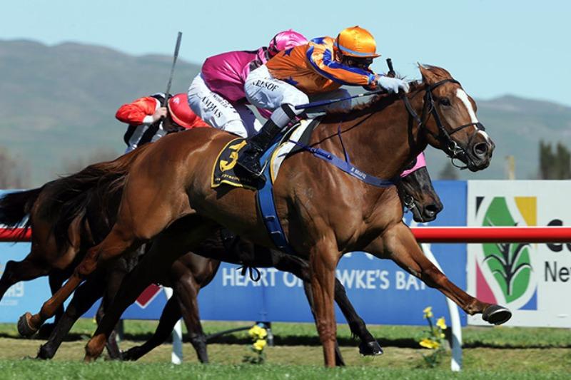 Windsor Park Stud | Horse Breeding | Horse Racing