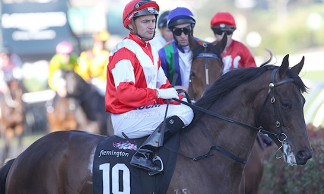 Mongolian Khan after the 2015 Makybe Diva Stakes run