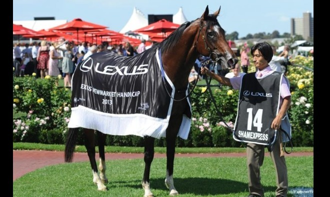 ShamExpress after winning the Gr.1 Newmarket Handicap